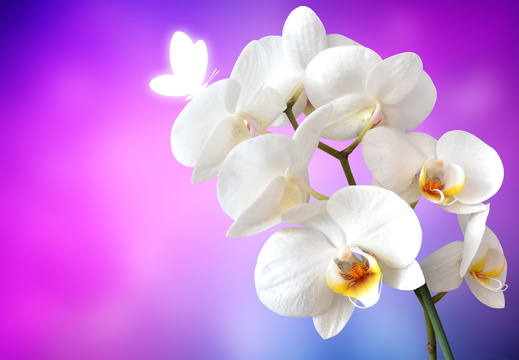 orchid-1259019