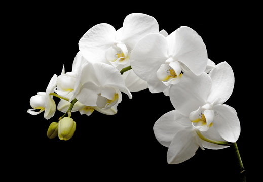 orchid-2124803