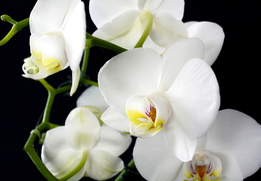 orchid-3097458